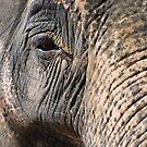Elephant's Eye by Luci Mahon