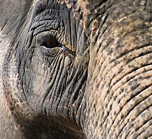 Elephant's Eye by Luci Mahon