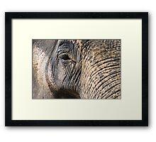 Elephant's Eye Framed Print
