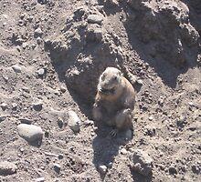 Fat Groundhog by silverdragon