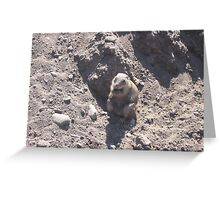Fat Groundhog Greeting Card