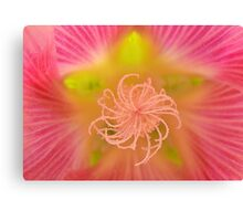 Hollyhock Macro Canvas Print