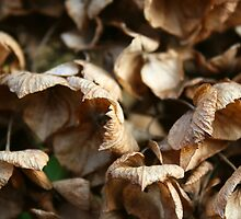 Dried up Leaves by GreyFeatherPhot