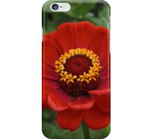 Cleveland Metroparks Zoo 16 iPhone Case/Skin