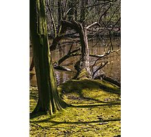 River Branches Photographic Print