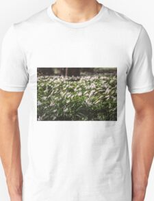 Wood Anemone Field T-Shirt