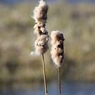 Cattails by Megan Noble