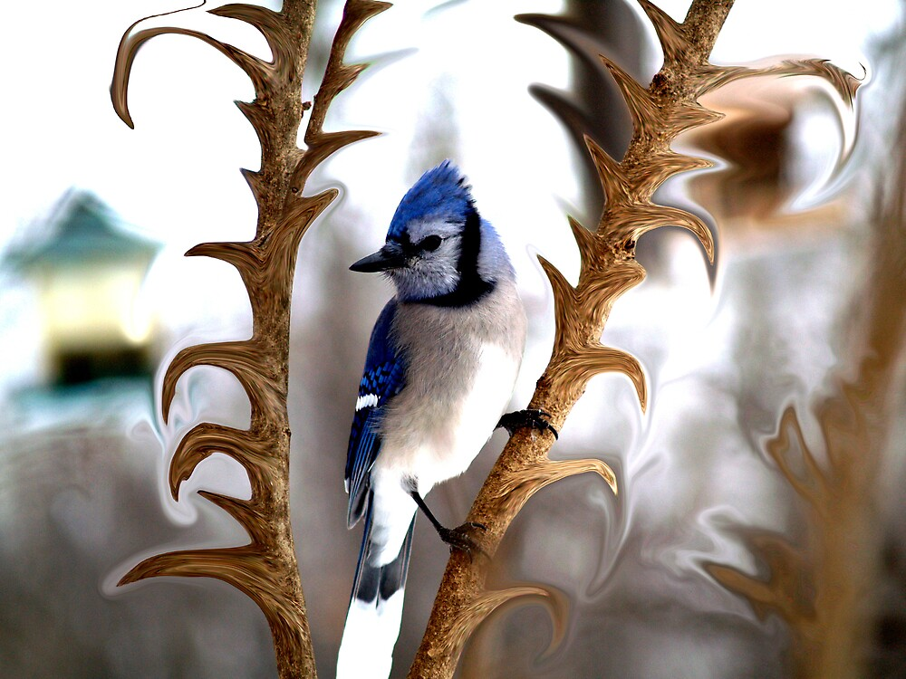 Special Effects of the Blue Jay. by DigitallyStill