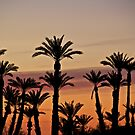Palms at Sunset by John Butler
