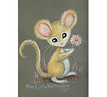 The Little Mouse Photographic Print