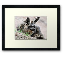 Bat-eared Fox Framed Print