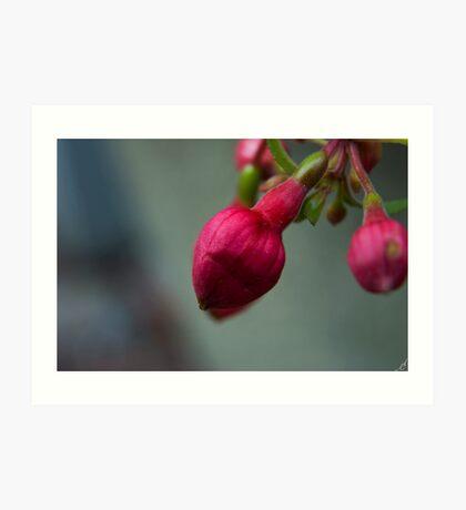 Spring Flower III Art Print