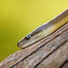 Snake Eye by Josie Eldred