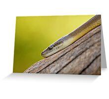 Snake Eye Greeting Card