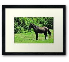 Black Horse Next to Bushes Framed Print