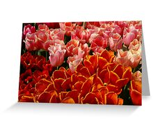 Colors of warmth Greeting Card