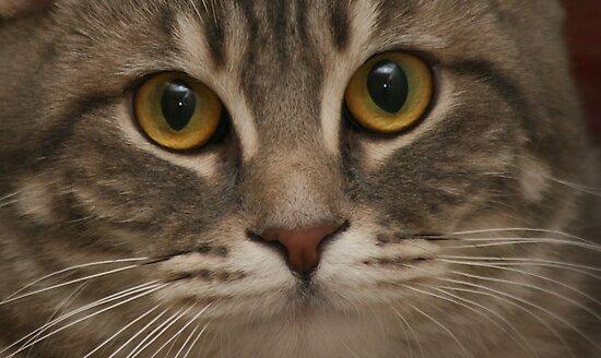 Kitty by Susanne Correa