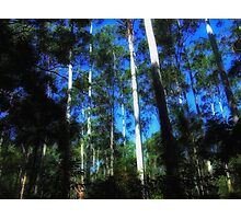 "'Ribbon Gums"" Photographic Print"