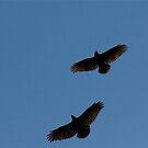 Birds flying High by kimwild