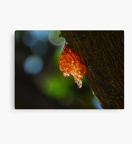 Lemon with golden syrup Canvas Print