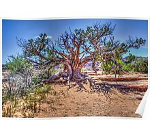 Utah Juniper on the Delicate Arch Trail Poster