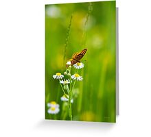 Meadow Butterfly Greeting Card