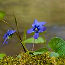 Little Blue Flower by Jane Best