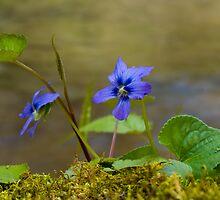 Little Blue Flower by Jane Best