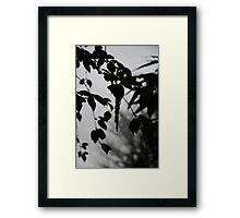 Catkin Framed Print
