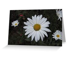 Daisies in the Garden Greeting Card