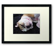 Bulldog Puppy Framed Print