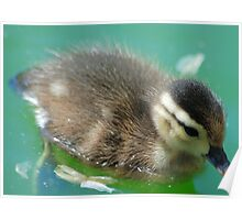 Wood Duck-ling 2 Poster