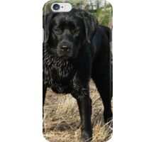 Early Spring Hunt - Black Labrador iPhone Case/Skin