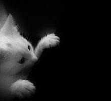 Peekin` The Boo by Ladymoose