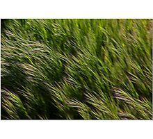 Leaves Of Grass Photographic Print