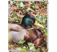 Male Mallard Duck Resting iPad Case/Skin