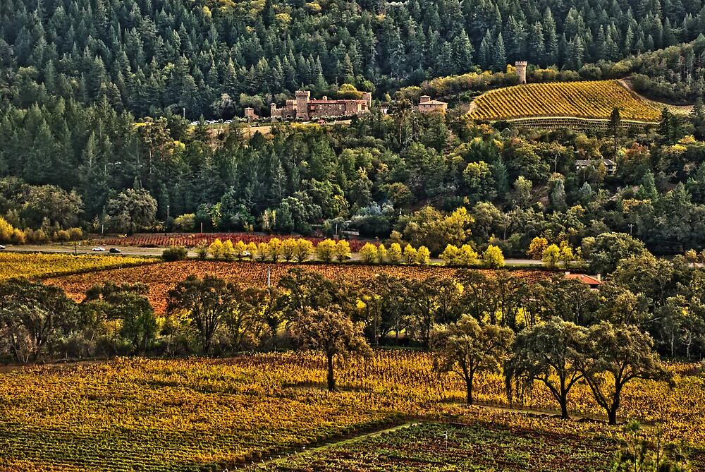 Napa Vineyards by Fraser Ross