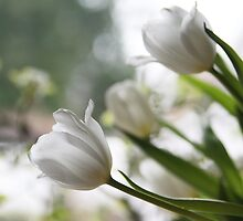 White Elegance by SylviaCook