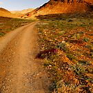 Richtersveld National Park by Thomas Peter