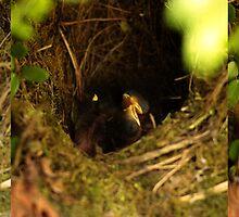 Baby Robins by LisaRoberts