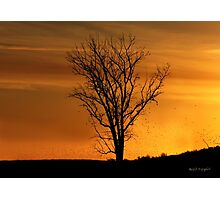 At End of Day II (Art & Poetry) Photographic Print