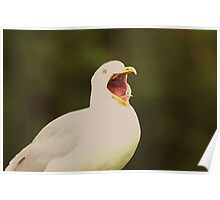 Seagull Shock!! Poster