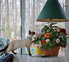 Stop and Smell the Flowers! by Eileen Brymer