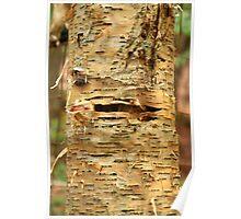 Natures Texture Poster