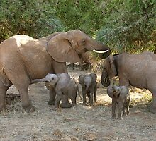 ELEPHANT FAMILY - SAMBURU by Michael Sheridan