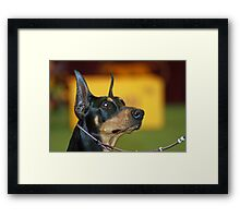 Young Manchester Terrier