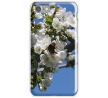 Humble Bumble and Cherry Blossom iPhone Case/Skin