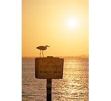 Heron at Sunset Photographic Print