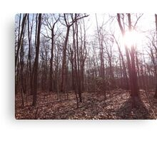 US Forest  Canvas Print