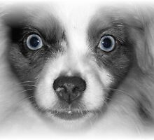 Blue eyes by cowgrl644